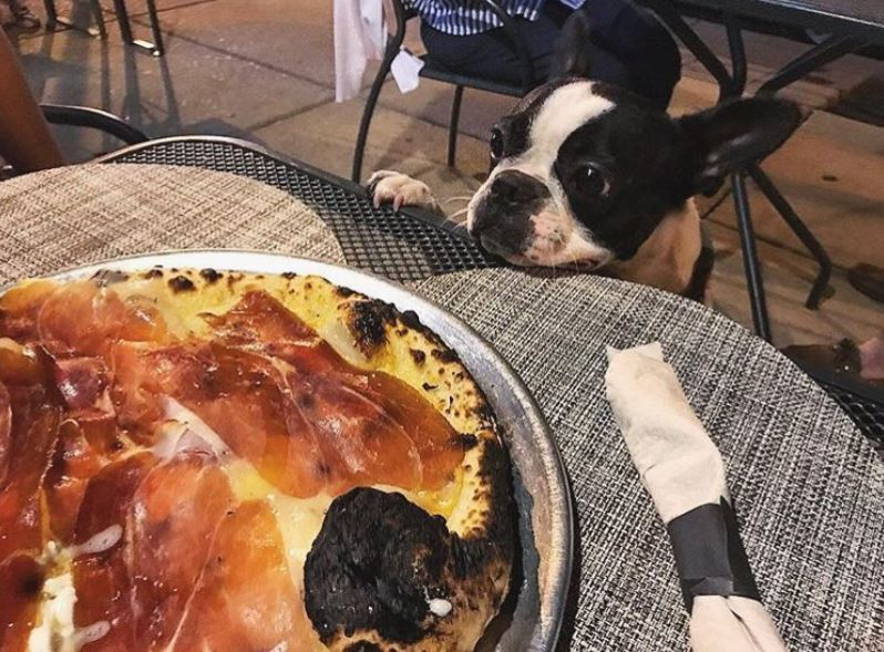 6 Pup-Friendly Restaurants to Wine and Dine at This Summer